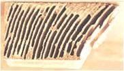 termites_10