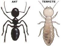termites_9